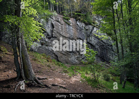 Farletter Crag, an outdoor climbing location in Strathspey near Kincraig in the Cairngorms National Park. - Stock Image