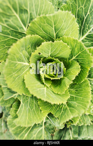 Close up of green plant - Stock Image
