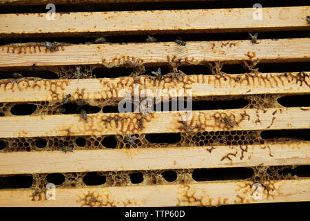Close up of wooden beehive frame - Stock Image