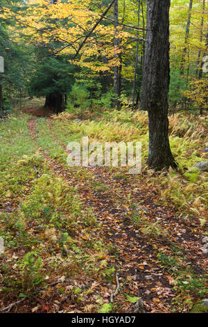 An old woods road in West Fairlee, Vermont.  Brushwood Community Forest project. - Stock Image
