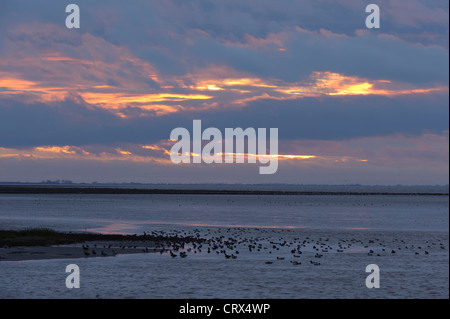 Wildfowl on the Wash estuary at Snettisham RSPB reserve, Norfolk, at sunset. November. - Stock Image
