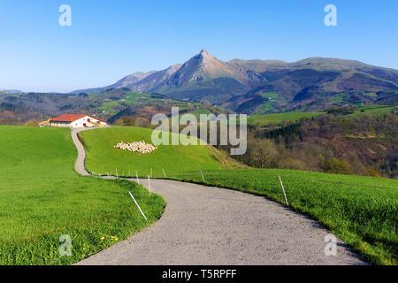 rural landscape of farm with sheep in Lazkaomendi in Gipuzkoa with Txindoki mountain - Stock Image