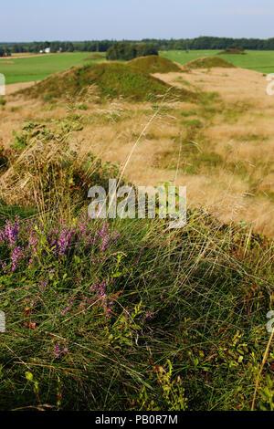 Bronze age burial mounds (Firehøje) near Vejle, Denmark - Stock Image