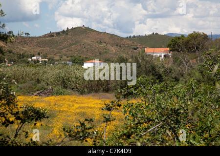 Portugal, Algarve, Near Silves, Countryside - Stock Image