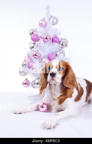 Dog with christmas tree. Christmas animal pet. Studio photo with white background and christmas tree ornaments. - Stock Image