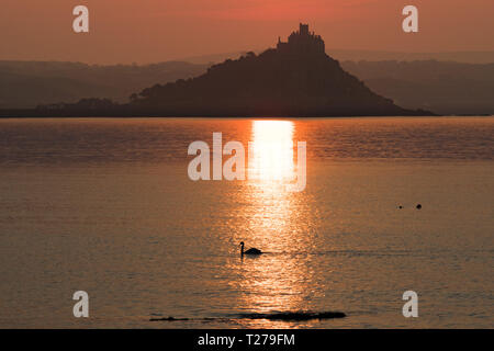 Swan on the sea at Mounts Bay in front of St Michaels mount at sunrise - Stock Image
