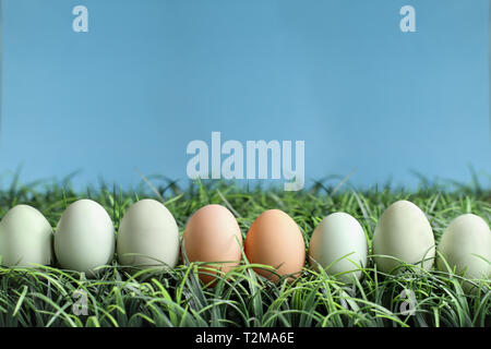 Natural colored Easter eggs in grass against a blue background with room for copy space. - Stock Image