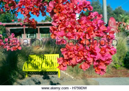 Colourful scene in Cedros Avenue in Solana Beach (San Diego County), California, USA. - Stock Image