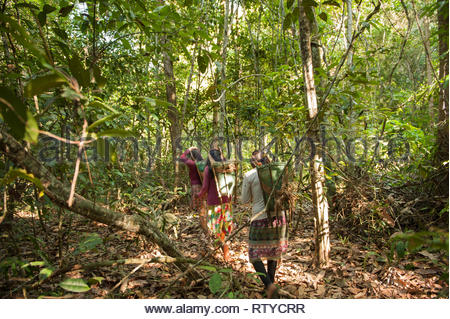 Mato Grosso State, Brazil. Kayapo Indian women with traditional design baskets, but made of plastic binding tape, trek into the rainforest to collect Cumaru (Dipterix odorata, Tonka beans) from the forest. - Stock Image