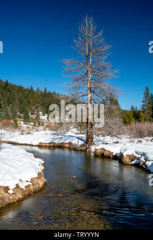 View of a creek at Sierra Nevada Donner Lake state park,  featuring snow covered ground in the winter - Stock Image
