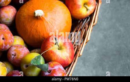 Colorful freshly picked plums Mirabelles red yellow green apples pumpkin in wicker basket on black grey stone background. Thanksgiving autumn fall har - Stock Image