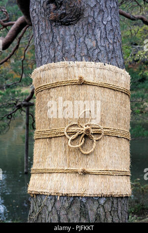 Japan, Tokyo, Rikugien Garden, rice straw cuff protecting a pine against insects - Stock Image