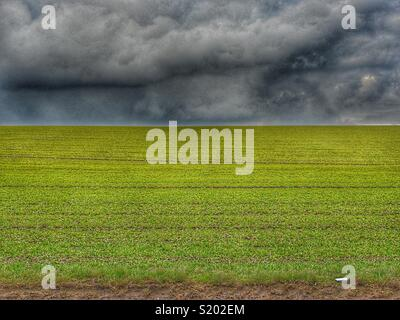 Field with fresh grass emerging against an angry, dark, menacing sky, Yorkshire Dales, England, UK - Stock Image