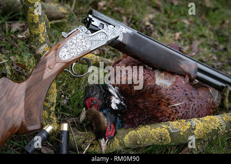 Traditional English game shooting in the autumn countryside with gun dogs. - Stock Image