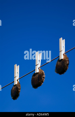 Hanging tea bags out to dry. Recycling - Stock Image