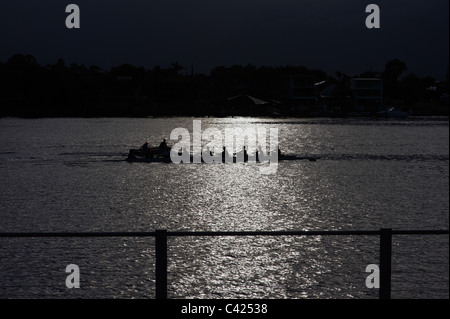 Rowers on the Brisbane River Australia in silhouette - Stock Image