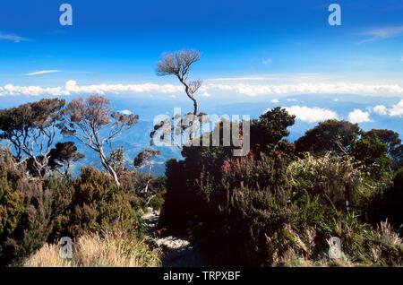 Mount Kinabalu National Park, Sabah, East Malaysia. Summit trail, view C.3200 metres - Stock Image