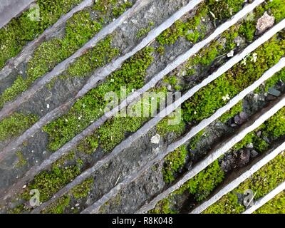moss between stone and steel - Stock Image