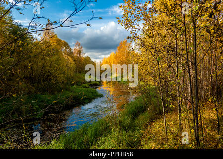 A forest river with banks of overgrown small forest of hardwood in September - Stock Image