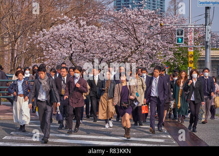 Morning Rush hour commuter crossing street at exit of train during cherry blossom season in Osaka, Japan - Stock Image