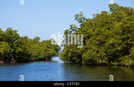 Mangrove Bocas del Toro Panama - Stock Image