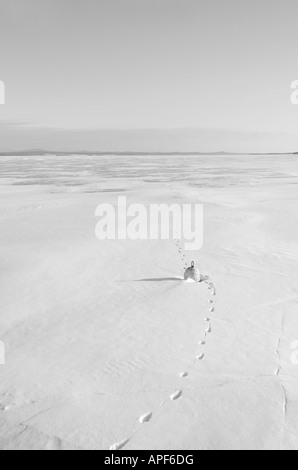 Frozen Winter Lake Champlain with buoy and animal tracks, North Hero, Vermont - Stock Image