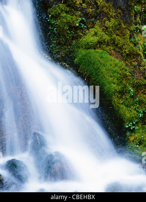 Lush green moss next to a small springtime waterfall. - Stock Image