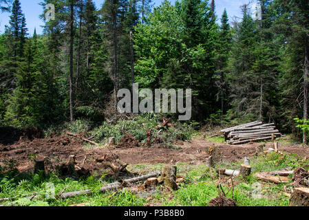 A land clearing and logging operation in the Adirondack Mountains, NY USA - Stock Image