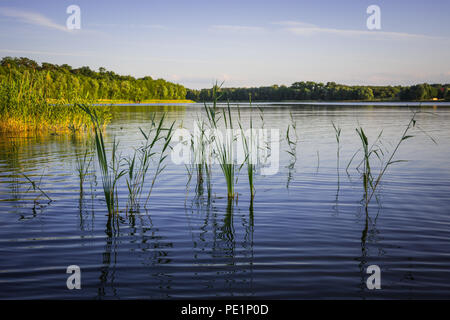 Lake in the forest during the springtime - Stock Image