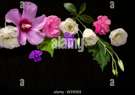 Black background with purple hibiscus heads, crimson oleander on leaves, white Lisianthus with buds and small violets - Stock Image