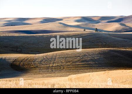 Harvested Field, Palouse, Washington - Stock Image