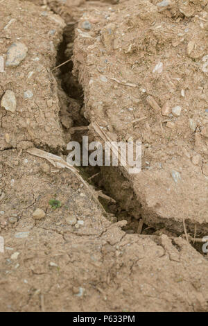 Deep cracks in water parched soil of cropped area - metaphor for drought, crop failure, crop losses, heatwave crops, famine, heatwave concept. - Stock Image