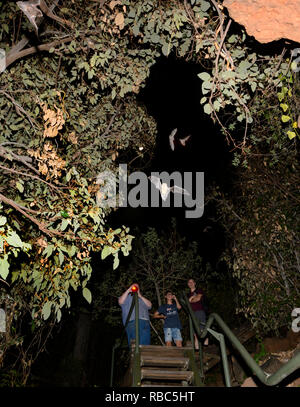 Tourists observing Eastern Horseshoe Bats or Micro Bats (Rhinolophus megaphyllus ignifer) coming out of Archway Cave to hunt at night, Undara Lava Tub - Stock Image