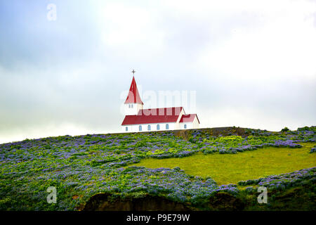 A red roofed church in Iceland with Lupins - Stock Image
