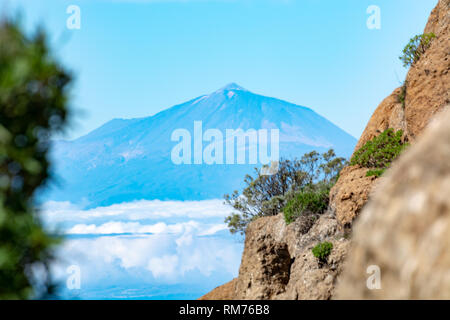 Green Canarian pine tree and Mountains landscape on Gran Canaria island, view on Mount Teide, Tenerife, Canary islands, Spain - Stock Image