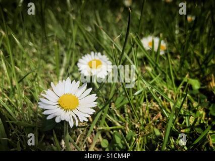 Spring in the garden - Stock Image