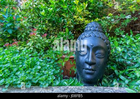 Buddha Head in Garden Planter - Stock Image