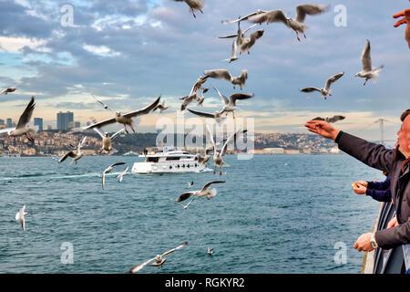 People feeding seagulls in Üsküdar, Istanbul, Turkey - Stock Image