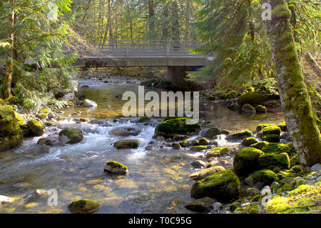 Bridge over Kanaka Creek with mossy rocks and sunlit trees. - Stock Image