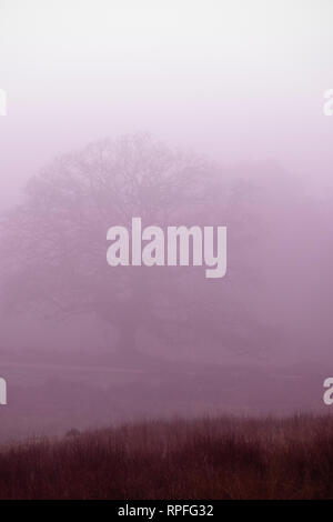 22nd February 2019 UK Weather New Forest Hampshire. A very foggy morning in the New Forest national Park. Credit Paul Chambers /Alamy Live News - Stock Image