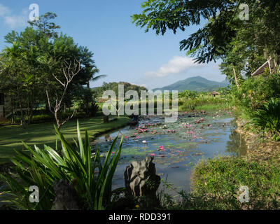 View from Hotel extensive grounds with lotus covered pond across rice fields to distant Luang Prabang mountain range Laos Asia - Stock Image