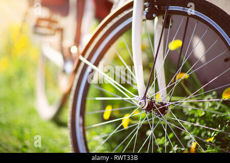bicycle in the forest in spring - Stock Image
