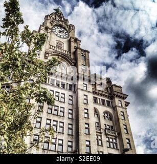 Liver building - Stock Image