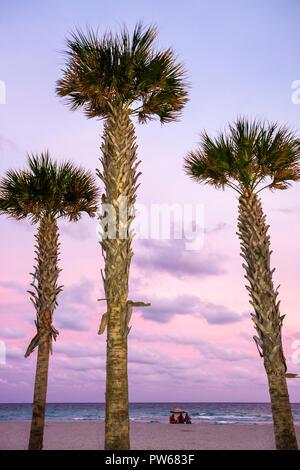 Hollywood Florida Hollywood Beach Boardwalk Atlantic Ocean three palm tree beach ocean dusk muted color pink sand fronds trunk g - Stock Image