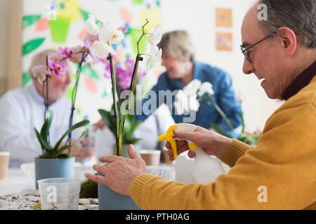 Active senior man with spray bottle watering orchid in flower arranging class - Stock Image