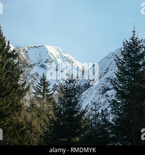 Squared image of Passo del Tonale, Adamello, The Alps, Italy. Snowy mountain landscape with beautiful snowy slopes and firs forest. Copy space for tex - Stock Image