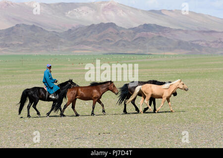 Horseman and three horses on the steppe of Mongolia. - Stock Image