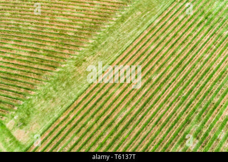 Abstract fragment of vineyard hill side on a wine making farm growing vines in Hunter Valley wine region of NSW, Australia. Aerial top down view to gr - Stock Image