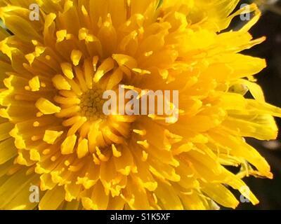 Yellow flower on macro - Stock Image