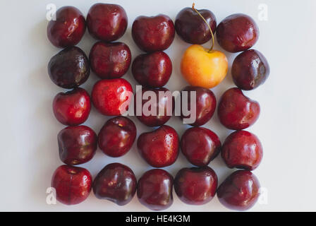 Red and yellow cherries lined up on a white background - Stock Image